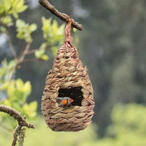 קן בית ציפורים פינקים צורות שונות