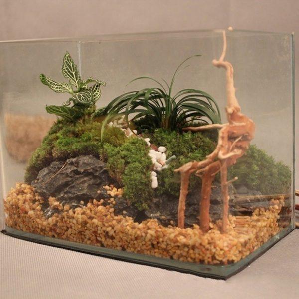 עיצוב אקווריומים גזע עץ