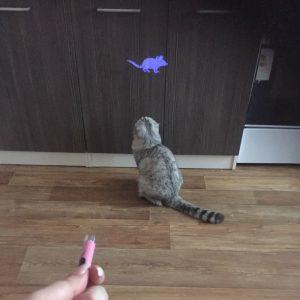 לשחק עם החתול תופשת צורת עכבר