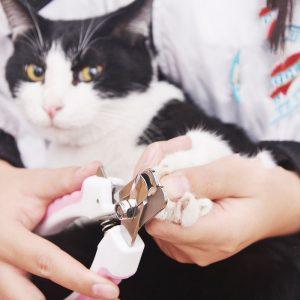 קוצץ ציפורניים כלב חתול