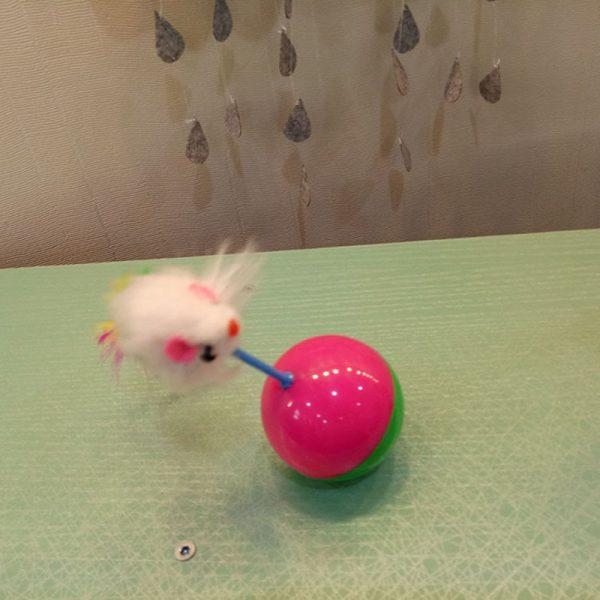 משחק עכבר לחתולים
