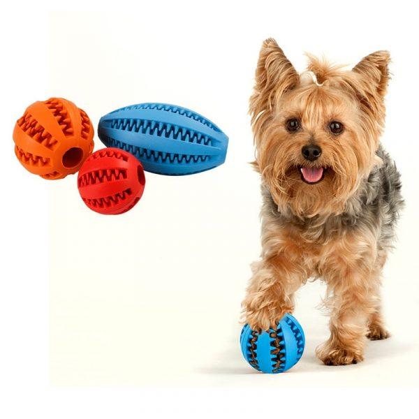 משחק כדור לכלבים
