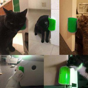 גירוד עיסוי חתולים